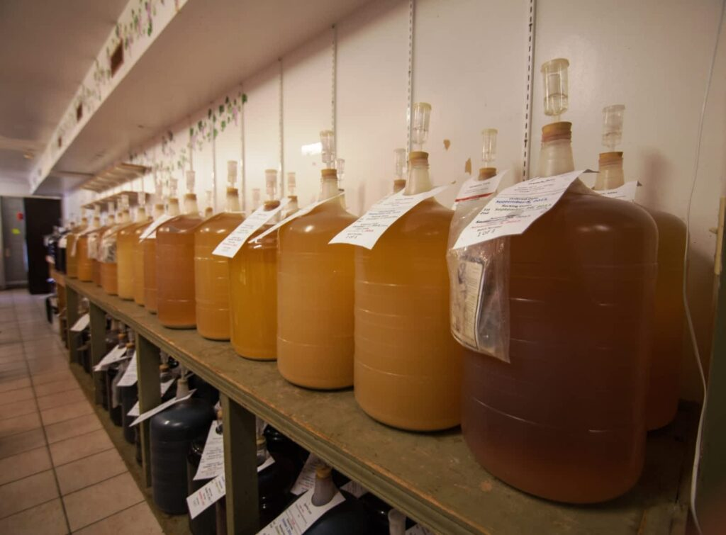 Dozens of Jugs Filled with Fermenting Wine